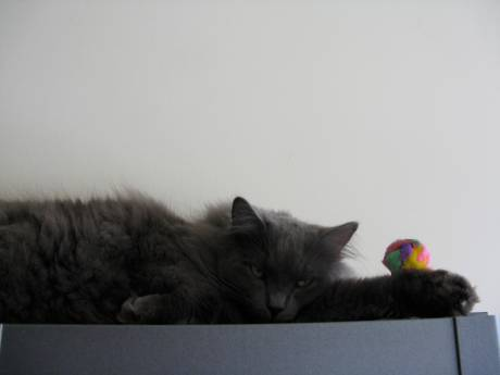 """circus cat"" by Tammy Schmidt"